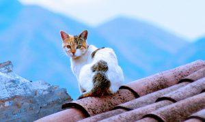 gato-tejado